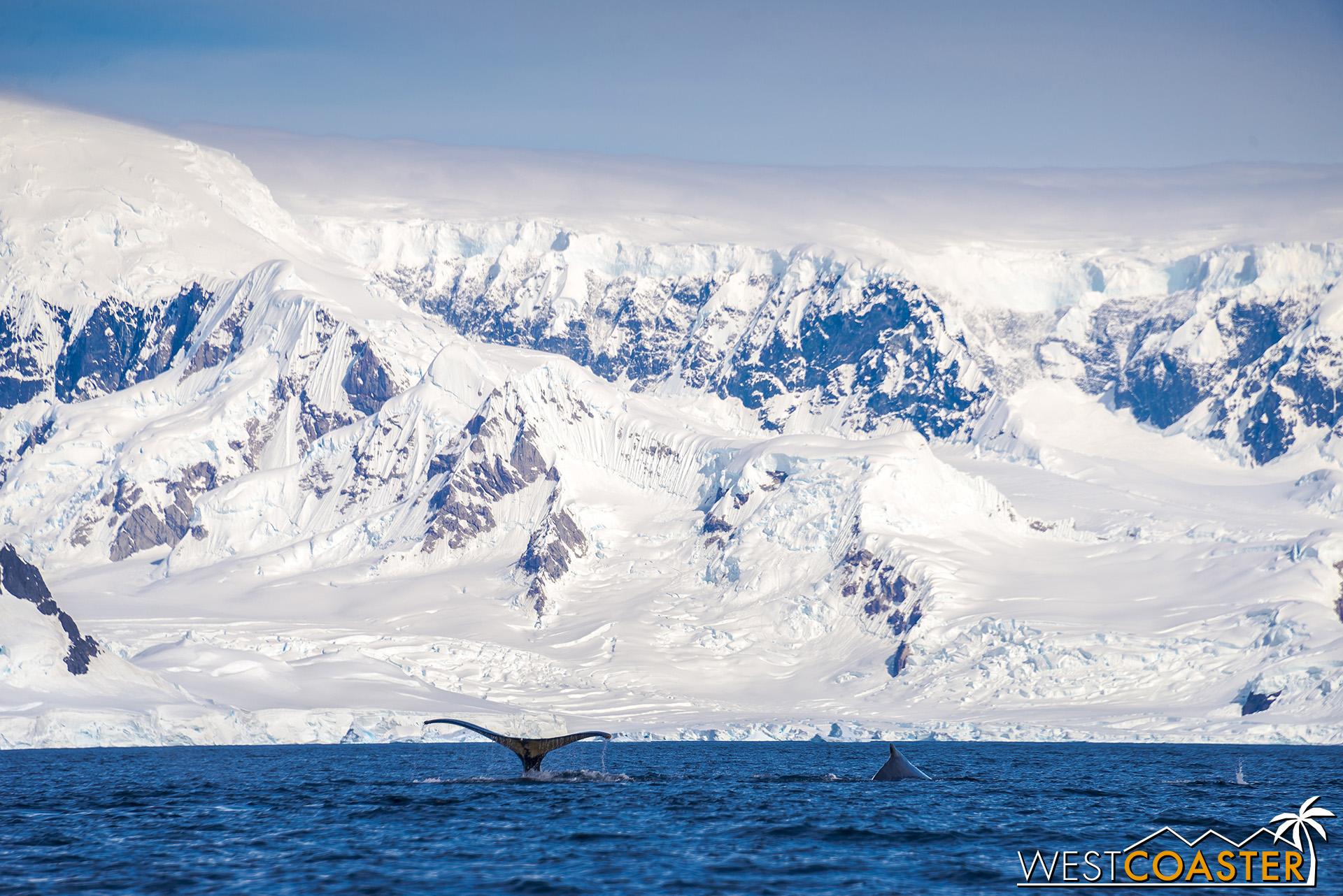 Antarctica-19_0114-B-WilheminaBay-0017.jpg