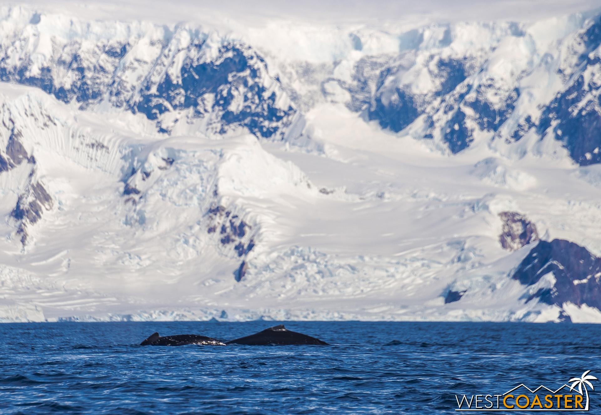 Antarctica-19_0114-B-WilheminaBay-0019.jpg