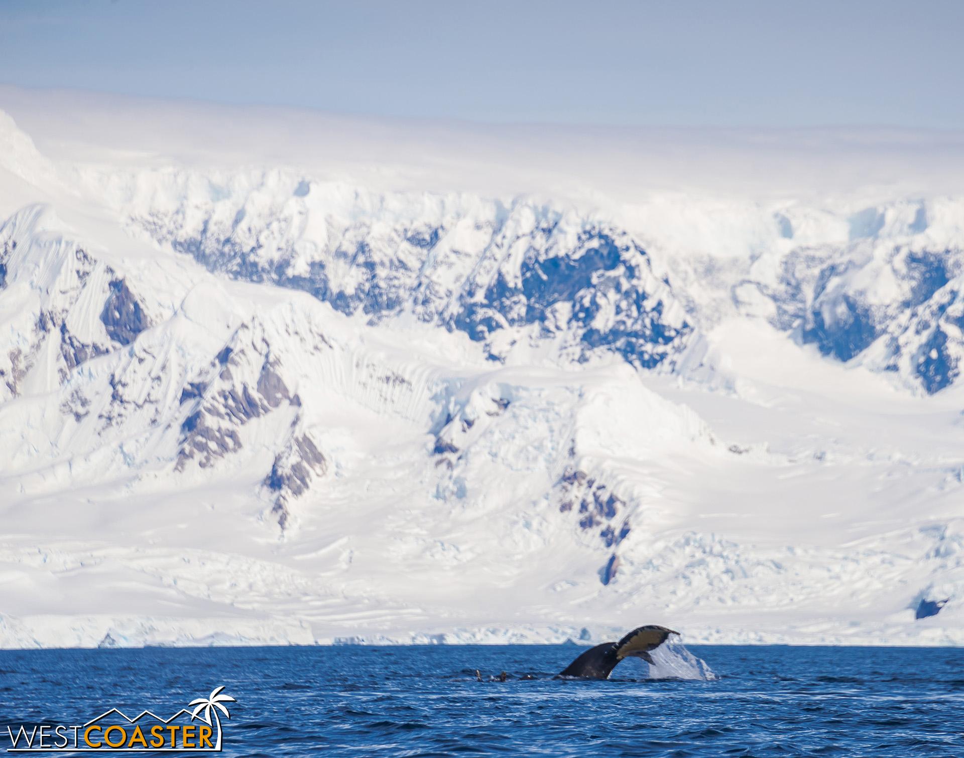 Antarctica-19_0114-B-WilheminaBay-0020.jpg