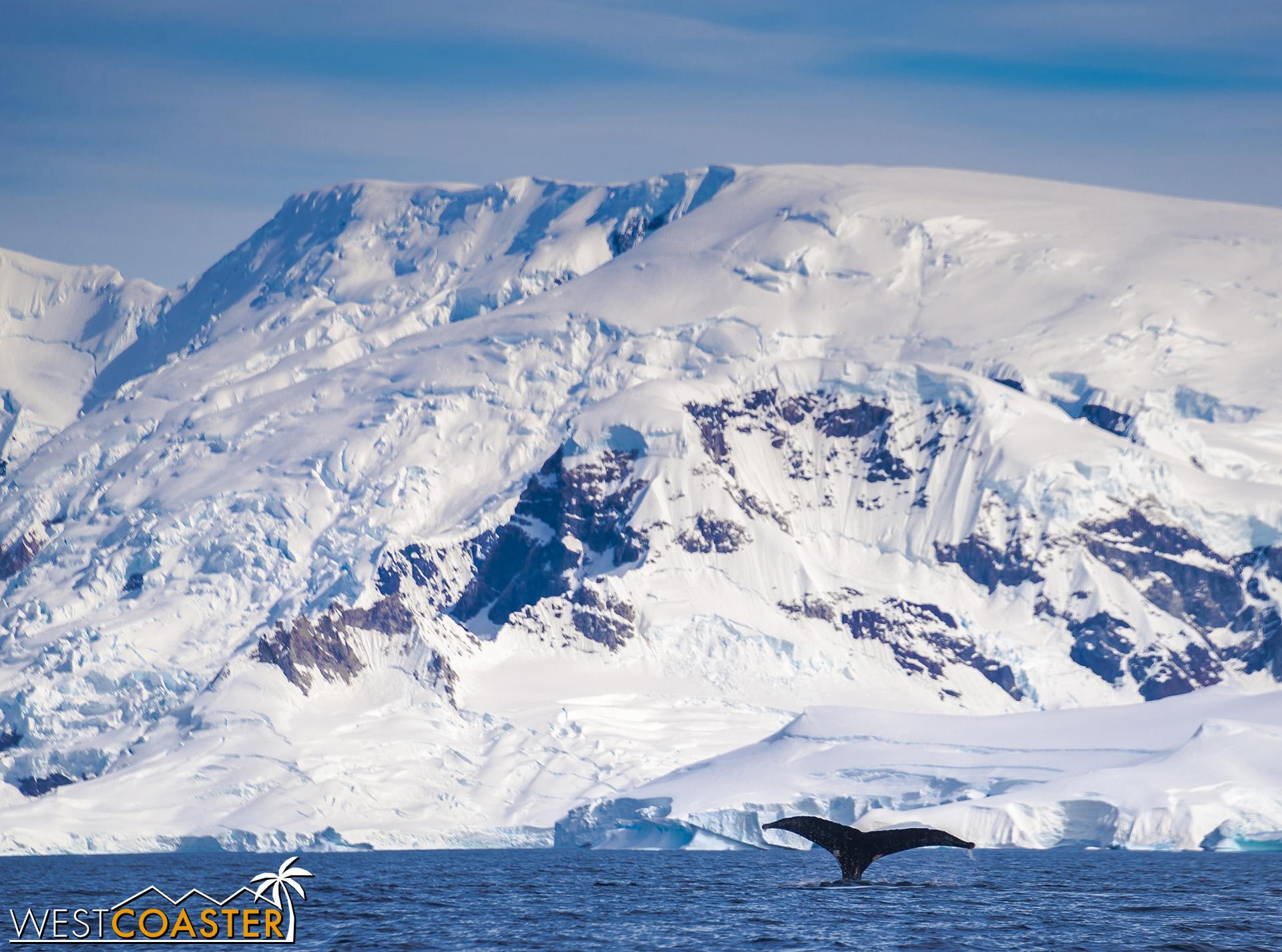 Antarctica-19_0114-B-WilheminaBay-0024.jpg