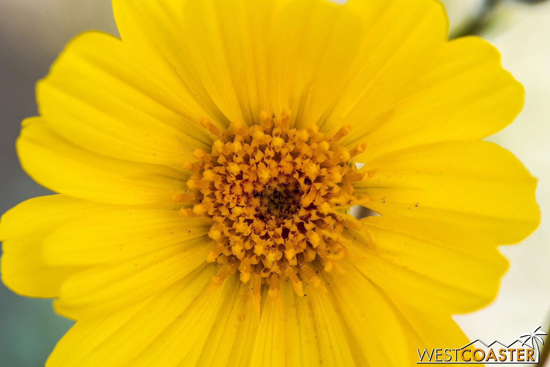 BorregoSprings-19_0315-0047.jpg