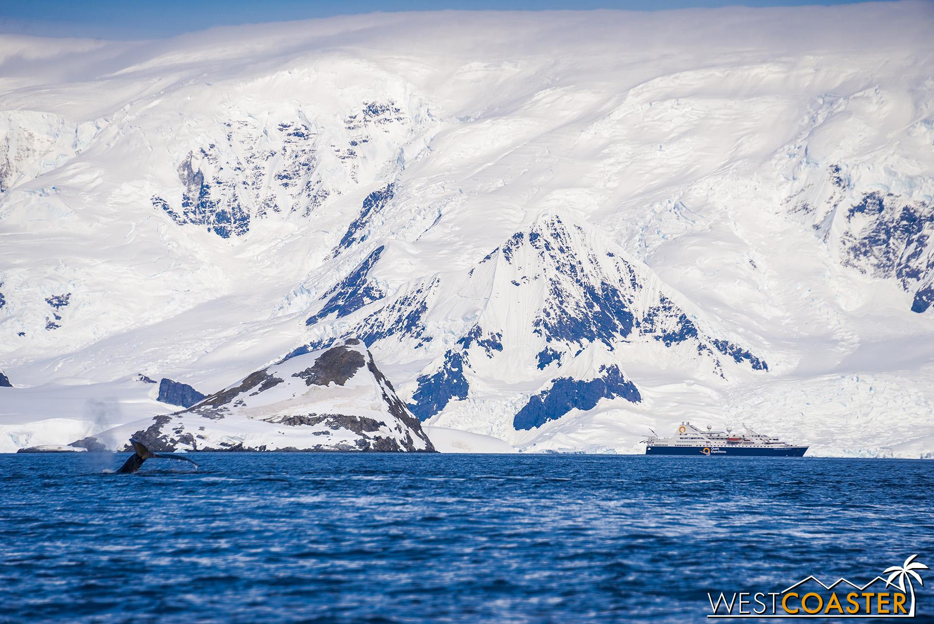 A whale flukes in Wilhelmina Bay.