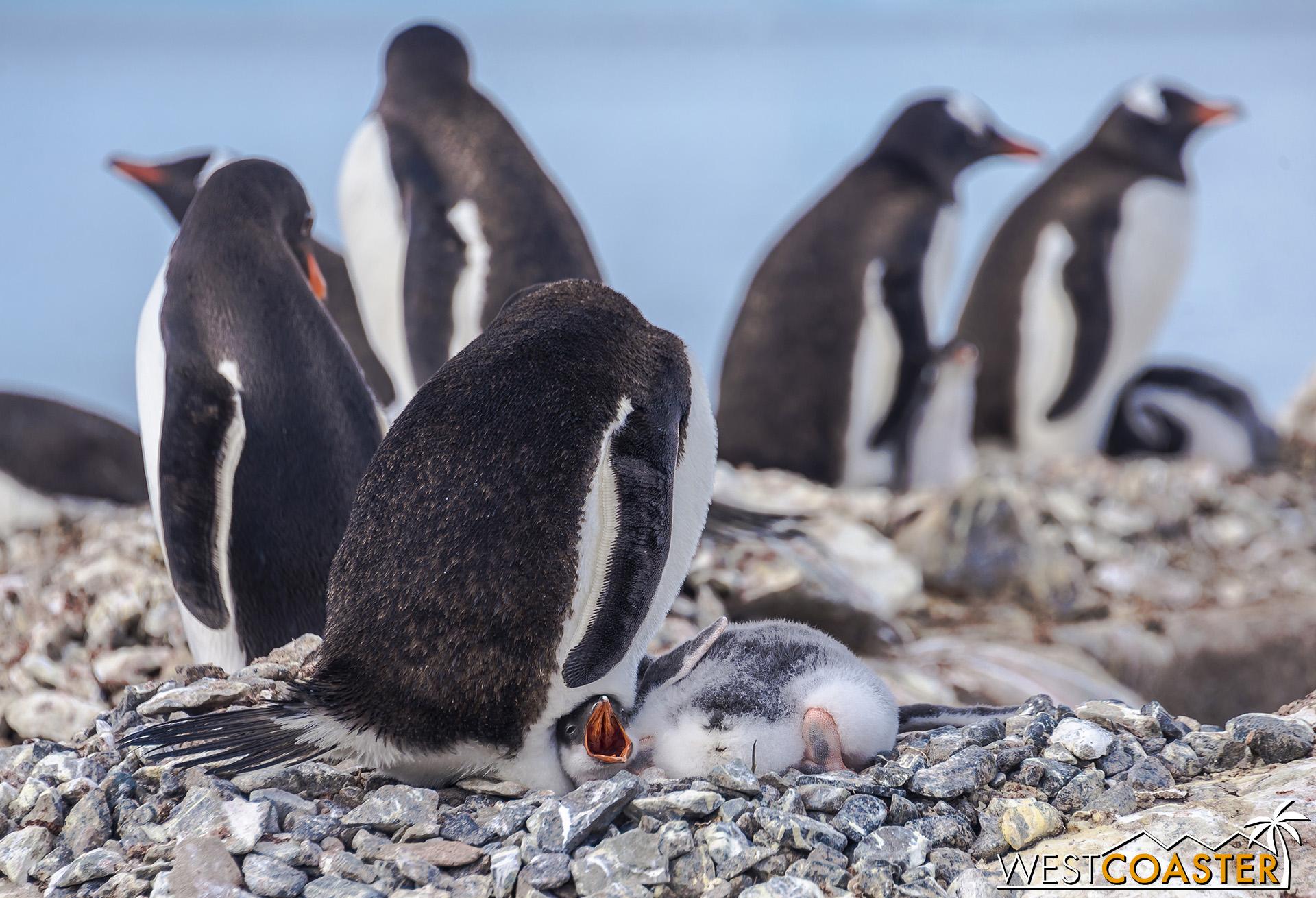 Penguins on a neighboring island at Port Lockroy.