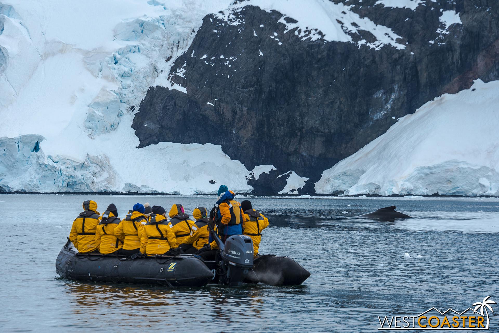 Spotting a humpback in Neko Harbor.