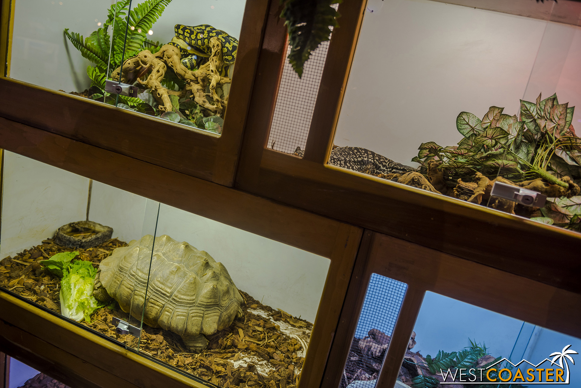 This reptile exhibit was one of several geared toward the autumn holiday mood.