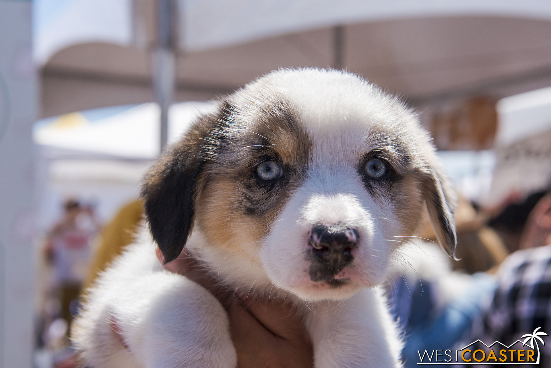 There were doggos everywhere, like this absolutely freaking adorable 8 WEEK OLD mix OMG JUST LOOK AT HIS EYES AND HIS FLUFFINESS AGGGHHHHHH ADORABLE OVERLOAD!!!