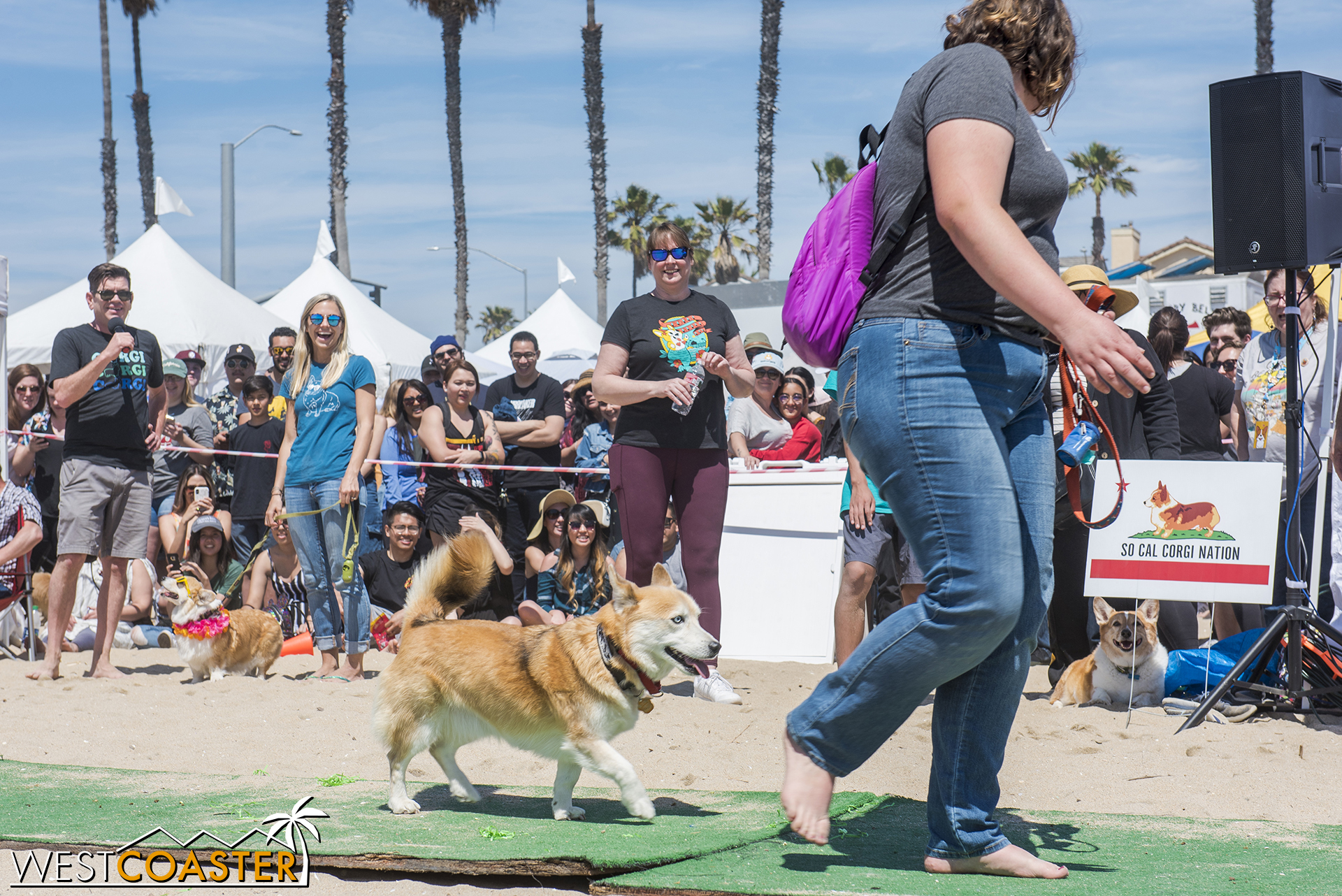 The corgis prance down the runway, showing off their moneymakers.