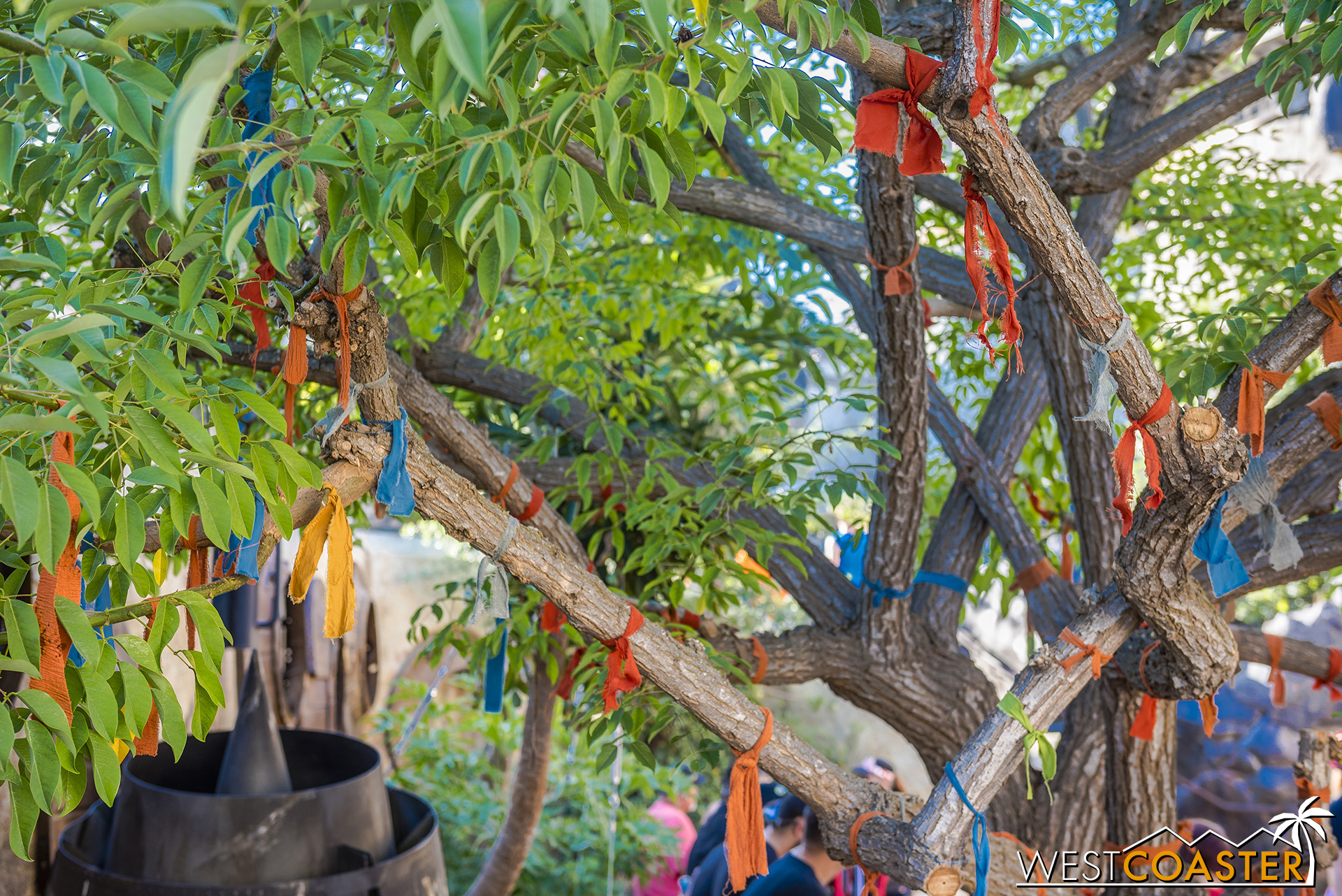The Wishing Tree outside Savi's.