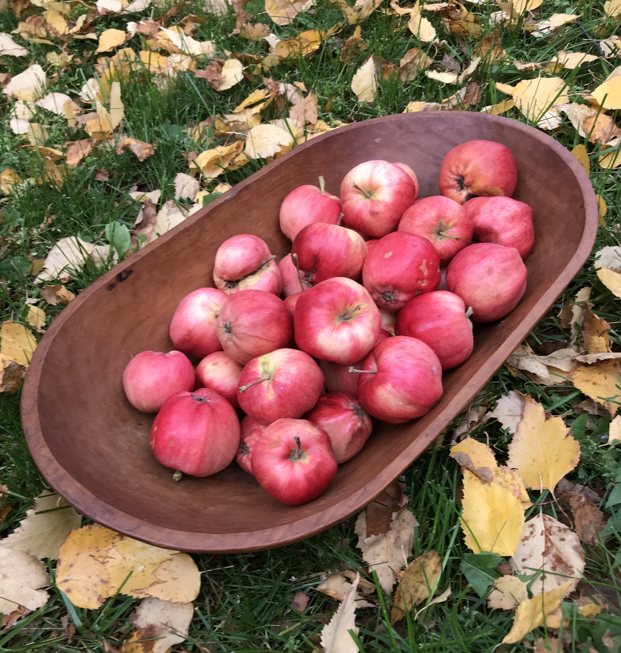 Bagged apples or homegrown mini apples give you a blood sugar friendly serving. Large grocery store apples can pack way too much sugar for your body to handle all at once. Bagged apples also cost a lot less which makes it easier to afford to buy organic versions.  (These cute, lumpy little apples are from my yard.)