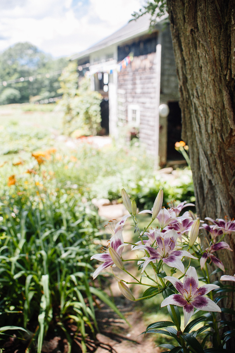 long-shot-to-barn.jpg