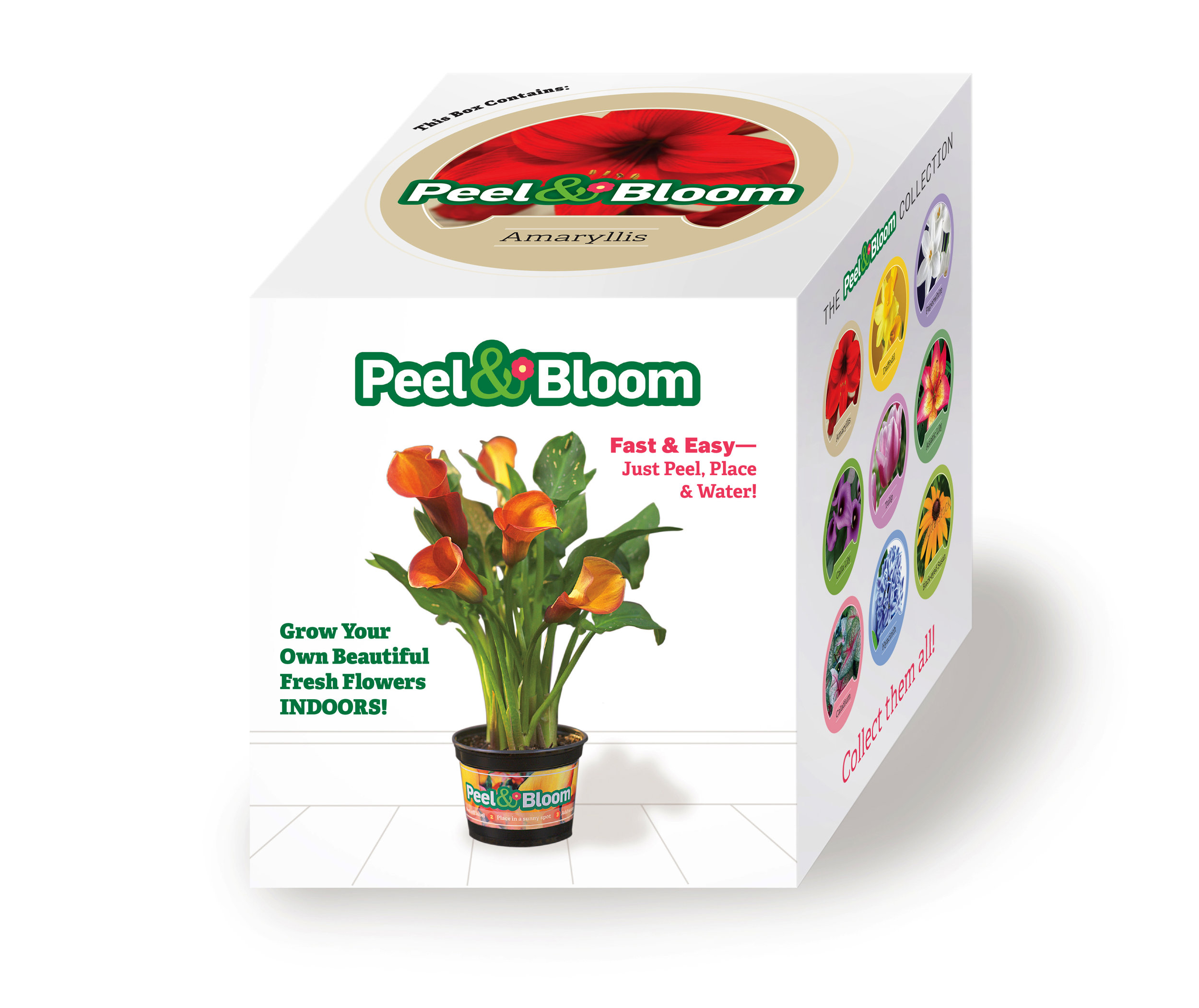 Peel & Bloom box.jpg