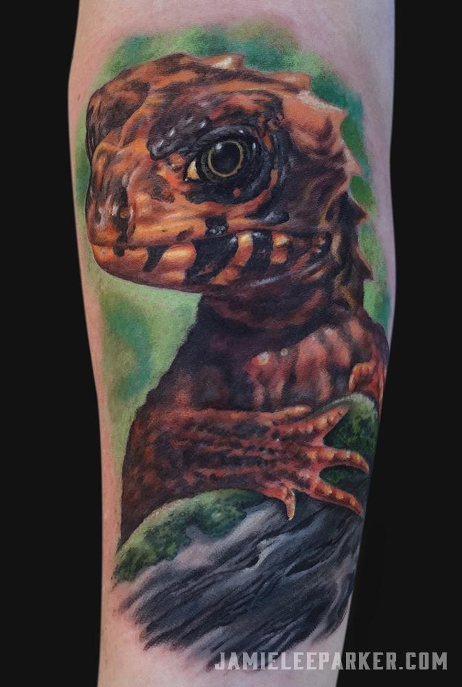 Red Eyed Crocodile Skink