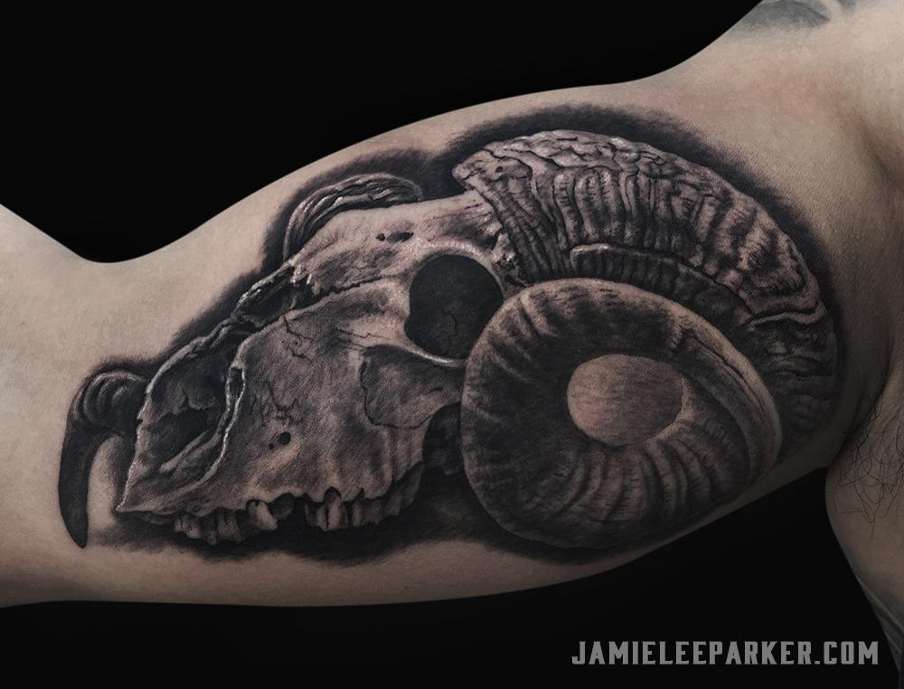Aries Ram Skull