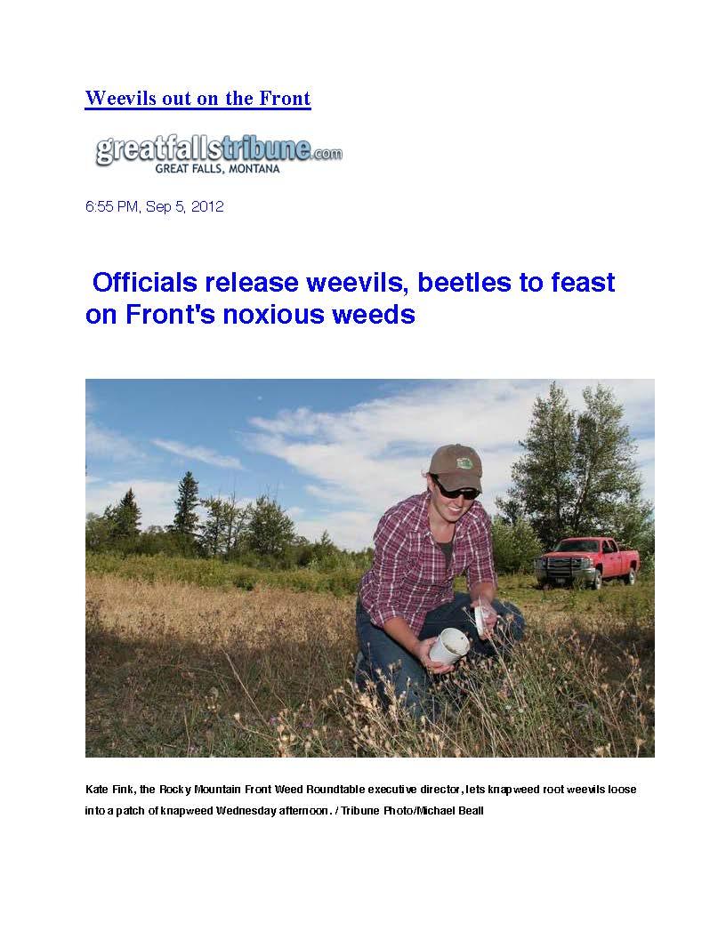 Weevils on Front_2012 1.jpg