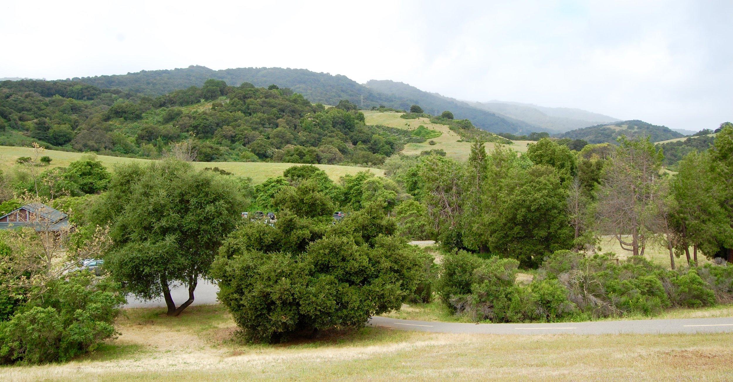 Rancho San Antonio Preserve, Los Altos, CA