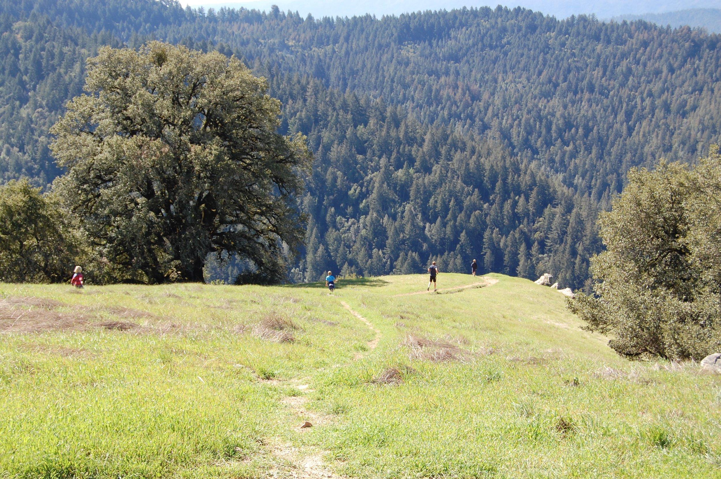 Long Ridge Open Space Preserve, spring 2016.