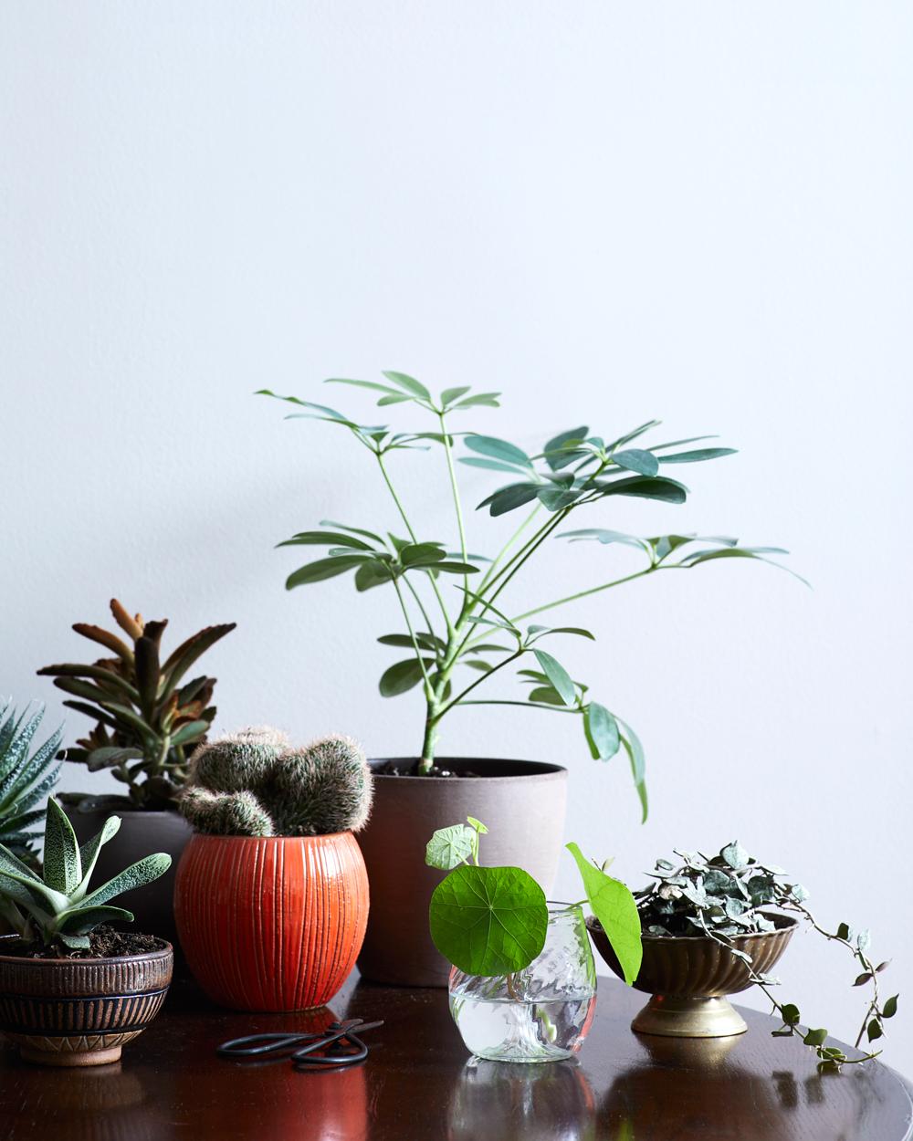 Plant-Group_073_R.jpg