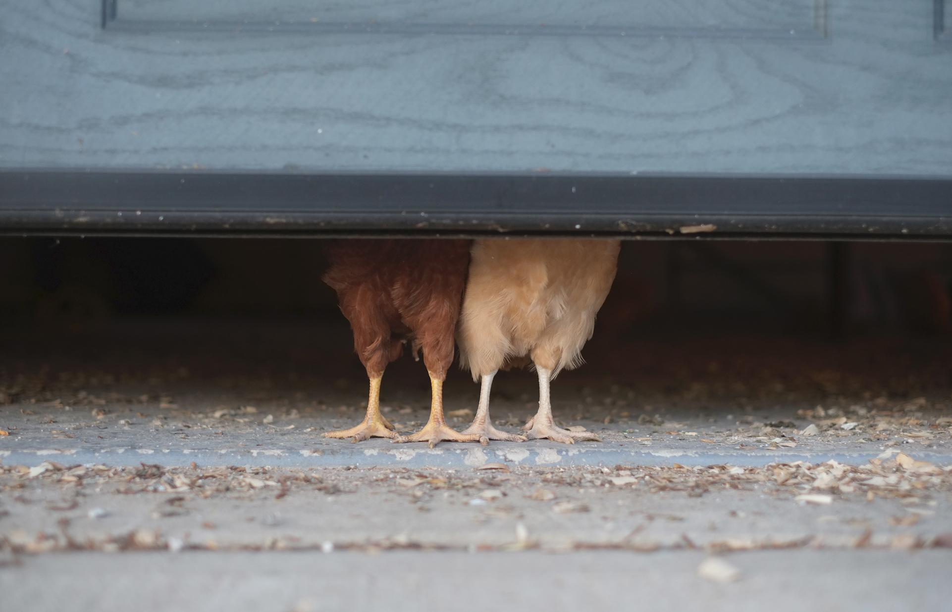 chicks_jimmy.jpg