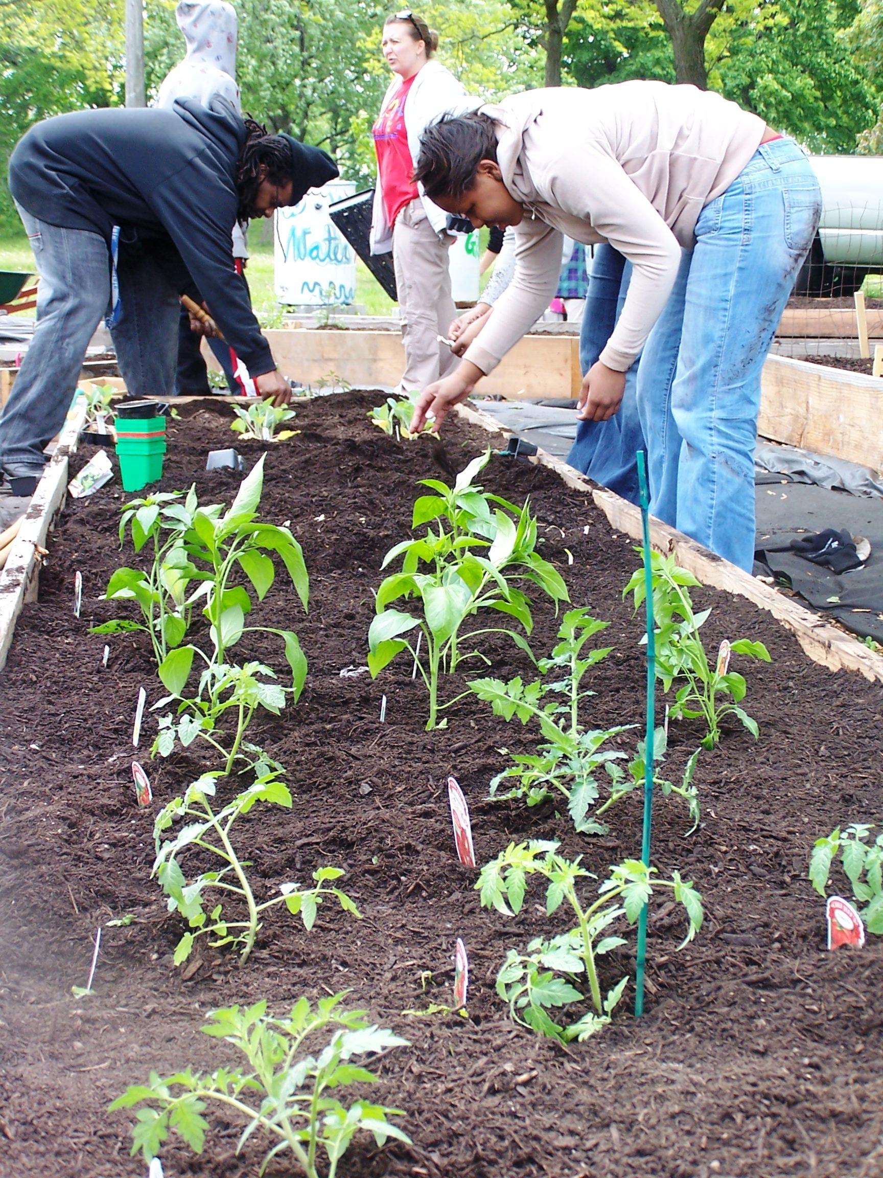 coa teen garden big (1).JPG