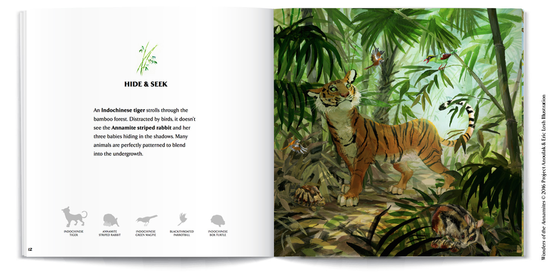 InsidePages-mockups-tiger.jpg