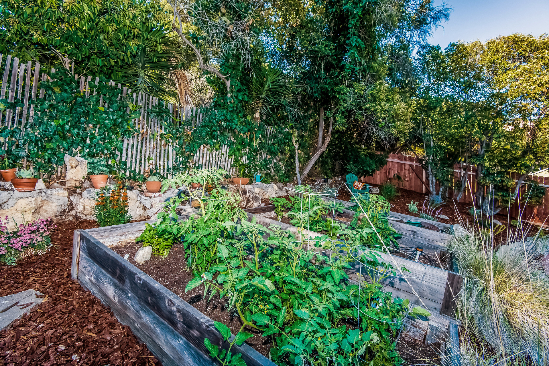 033-Upper_garden_in_backyard-2907678-medium.jpg