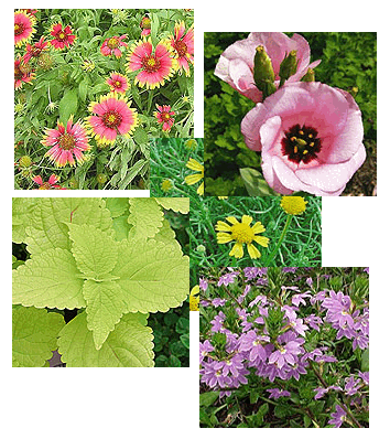 collage-flowers copy.png