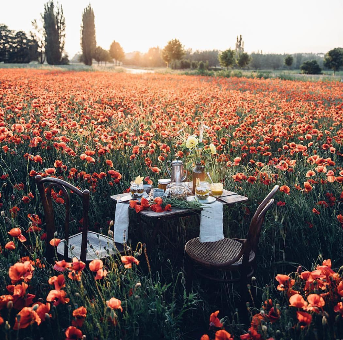 Picnic in field of poppies from   A Dreamy Life