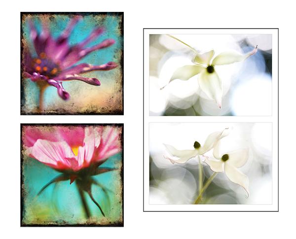 **Flower Power for blog 600 pixels.jpg