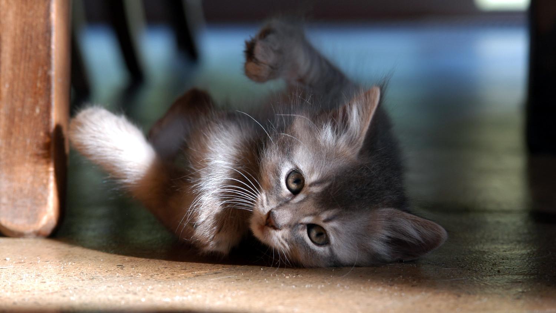 kitten_chair.jpg