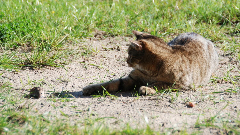 cat-mouse.jpg