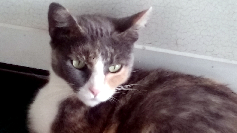 Mary's feline friend - Ms. Kitty