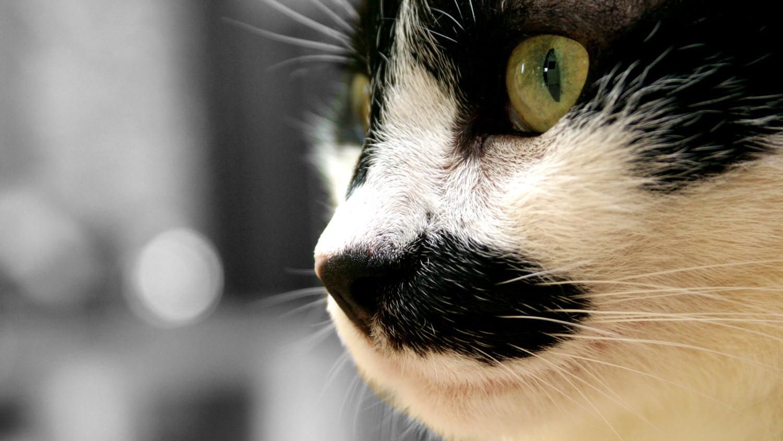 cat-stare.jpg
