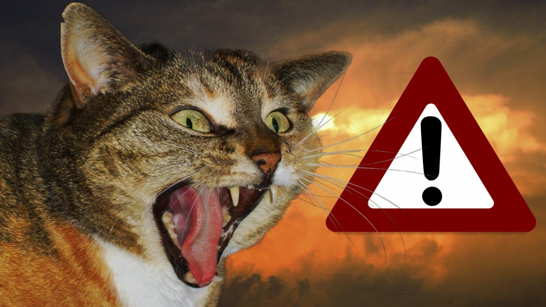 cat-evac-kit.jpg
