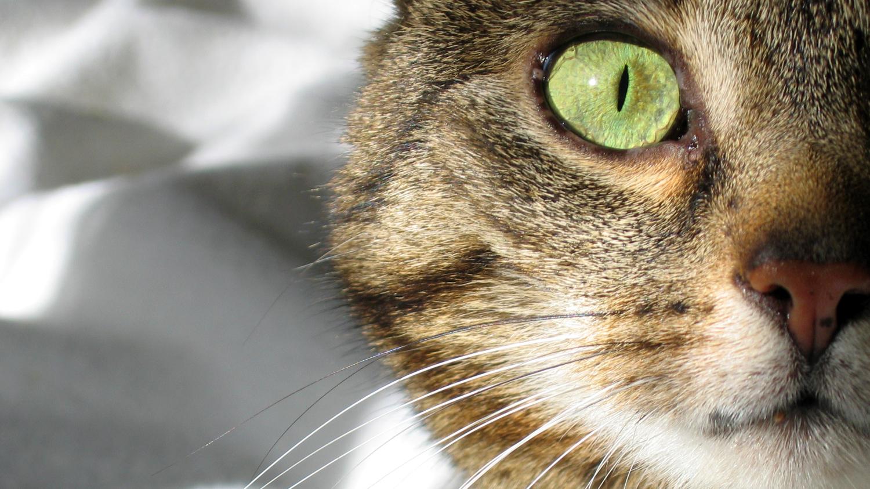 scared-cat.jpg
