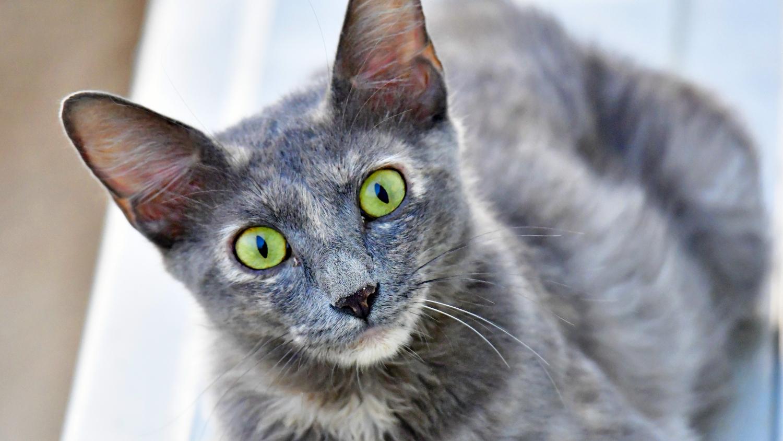 cat-green-eyes.jpg