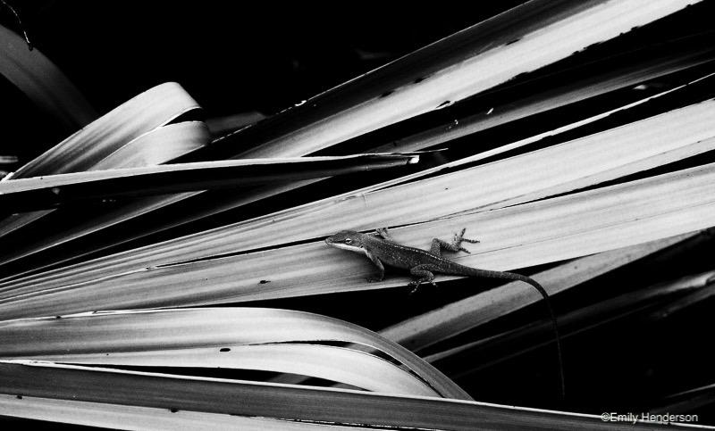 Lizard on a Palm Leaf
