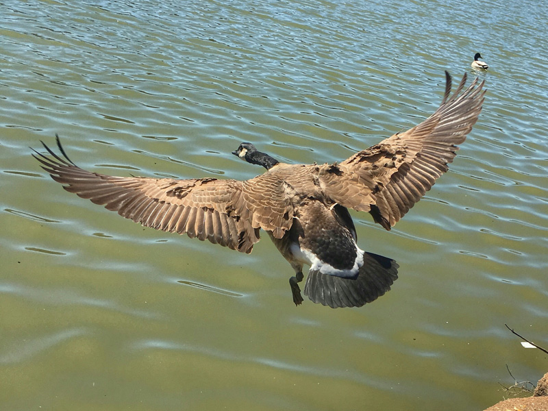 lavook@aol[com~Junior Youth~Birds~1.jpg