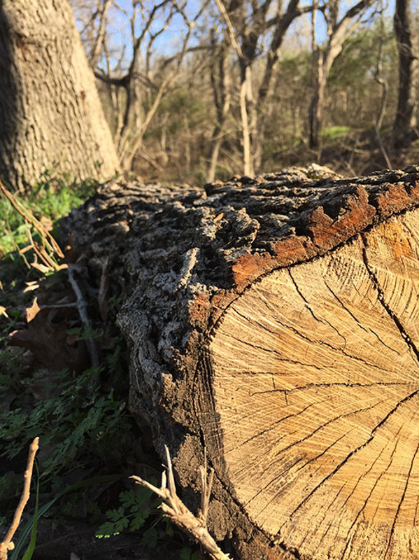 a cut tree showing rings, and other nature