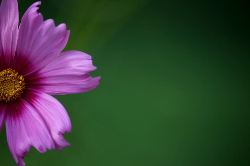 kalenafoy@gmail[com~Junior Youth~Floral~2.jpg