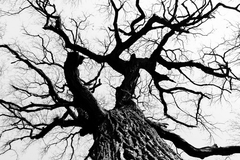 Roots in the sky