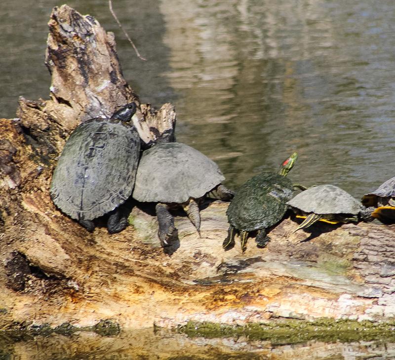 TurtleFamily