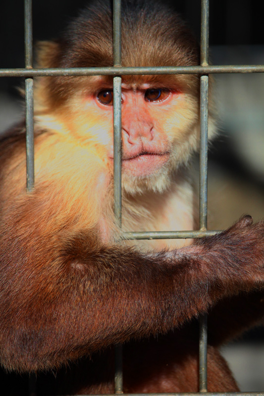 kalenafoy@gmail[com~Junior Youth~Animals - Captive (including pets)~1.jpg