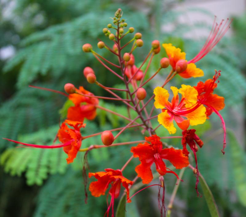 Japanese Bloom