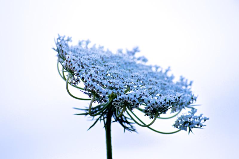 Wildflower Rhapsody