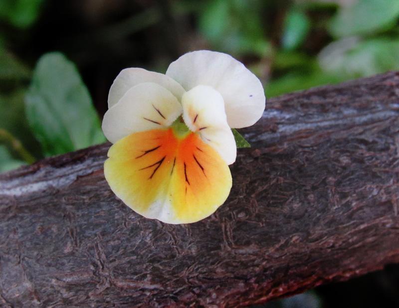 brian@bmagphoto[com]1~Junior Youth~Floral~1.jpg
