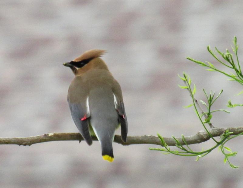 brian@bmagphoto[com]1~Junior Youth~Birds~2.jpg