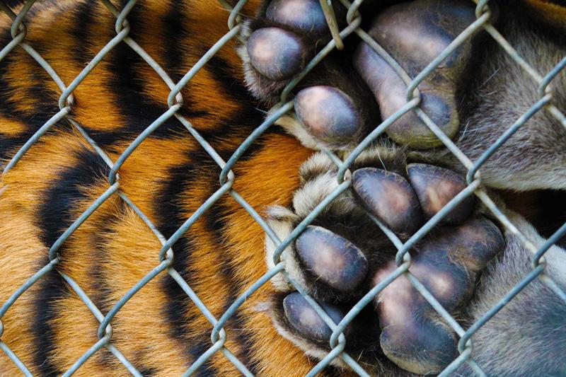 Cage of Wild