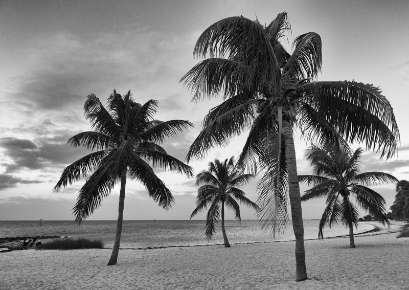 Florida Keys Palms©LeeHatfield2015