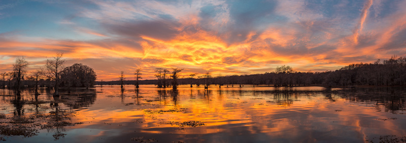 Caddo Lake Sunset #2