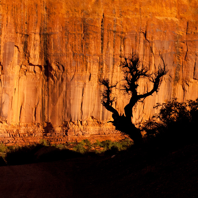 © Ron Marabito, Tree silhouete in Monument Valley